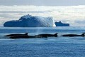 Global Whaling Moratorium Stands as IWC Shelves Compromise Plan