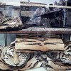 Police in Six Countries Nab 25 Suspected Tiger Traders