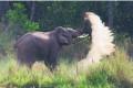 India Gives Elephants 'National Heritage Animal' Status