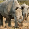 Conservation With Teeth Needed to Save Nature's Backbone