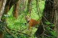 India to Establish More Tiger Reserves
