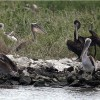 BP to Pay $1 Billion for Early Gulf Coast Restoration