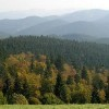 Seven Nations Safeguard Carpathian Old Growth Forests