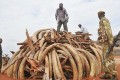 Kenya Sets Five Tonnes of Contraband Ivory Ablaze