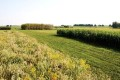 Cellulosic Ethanol Production Far Behind Renewable Fuel Standard