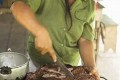Sustainable Bushmeat Harvesting Is Possible, Finds UN Report