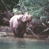 Javan Rhino Declared Extinct in Vietnam