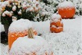 Early East Coast Snowstorm Knocks Out Power for 2.5 Million
