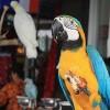 Police Raid Asian Wildlife Markets in New Enforcement Push