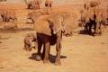 Elephant Poachers in Kenya Kill Rukinga Ranch Ranger