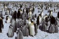 Penguin Numbers Doubled in First Species Survey From Space