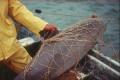 Marine Mammals in Mexico, New Zealand Face Extinction
