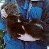 Pot Growers' Use of Rat Poison Killing Rare Carnivores