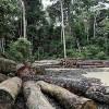 Deforestation Slows Across Brazilian Amazon