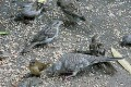 Scotts Miracle-Gro Fined $12.5 Million for Toxics in Wild Bird Food