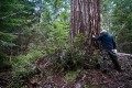 Enviros Fight Industry Lawsuit Over U.S. Forest Planning Rule