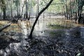 Top U.S. Court Rejects Chevron's Appeal in Ecuador Pollution Case