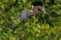 U.S. Voters Approve Conservation Ballot Measures Worth Billions