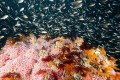 Obama Proposes to Expand Two California Marine Sanctuaries