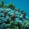 China's Corals Fall Victim to 'Wicked Environmental Problems'