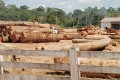 Interpol Arrests 194 in Illegal Logging Sting