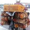Seven Dead in China as Bird Flu Virus Infects Humans