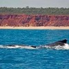 Gas Hub Out of Whale Nursery on Australia's Kimberley Coast