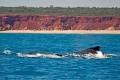 Gas Hub Out of Whale Nursery on Australia's Kimberley Coast