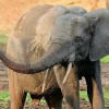 Elephants Slaughtered Amidst Chaos in Central African Republic