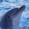 Conservationists, Scientists Outraged by Japanese Dolphin Hunt