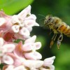 EPA Debuts Bee-Protective Pesticide Labels, Enviros Demand More