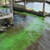 Florida Waters Alive With Toxic Algae, Toxic Politics