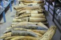 U.S. to Crush Six Tons of Contraband Elephant Ivory