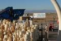 U.S. Crushes Six-Ton Ivory Stockpile