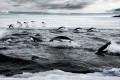 Antarctic Marine Reserves Again Blocked by Russia