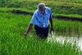 Typhoon Spares Philippines' Rice Fields