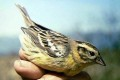 Human Pressures Leave More Birds Critically Endangered