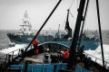 Sea Shepherd, Japanese Whalers Collide at Sea and in Court