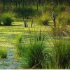 Eco-Conscious Agriculture Key to Healthy Wetlands