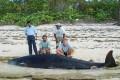 New Species of Deep-diving Beaked Whale Identified