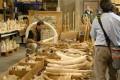 Obama Bans U.S. Commercial Trade of Elephant Ivory