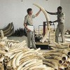 Global Wildlife Crime Sting Arrests 400+ Suspects