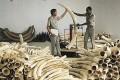Global Wildlife Crime Sting Arrests 400+ Suspects