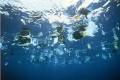 European Parliament Takes Aim at Plastic Bags