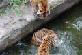 Ukraine Turmoil Leaves Zoo Animals Starving