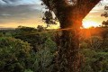 Oil Vote Deadline Looms for Ecuador's Yasuní National Park