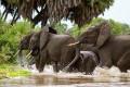 African Poachers Beware: Billionaire Brandishes His Wallet