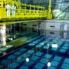 New Micro-algae Clean Highly Radioactive Waste