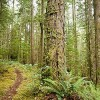 British Columbia Not Obliged to Protect Endangered Forests