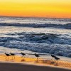 World Oceans Day 2014 Dawns on Oceans in Danger